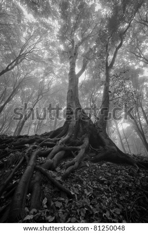 tree with wet roots in a forest - stock photo