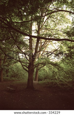 tree with winding branches - stock photo