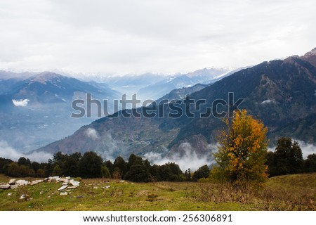 tree with yellow foliage in autumn in himalayan mountains - stock photo