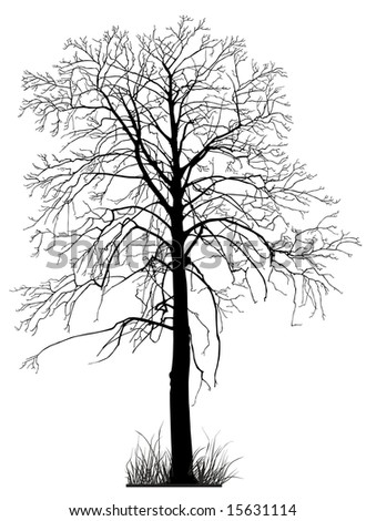 Tree without foliage