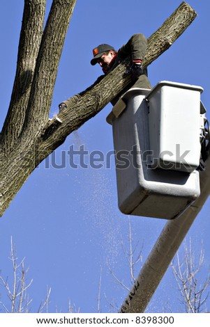 Tree work being done on a winter day on a very blue-sky day. - stock photo