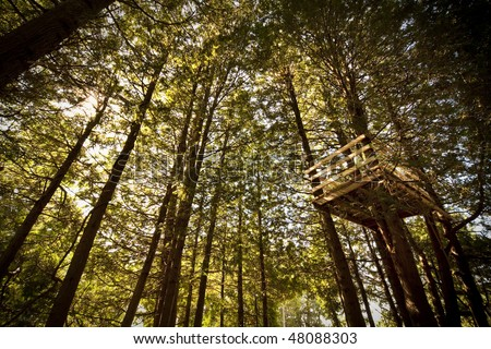 Treehouse Amongst Tall Trees - stock photo