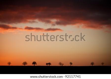 Treeline Sunset - stock photo