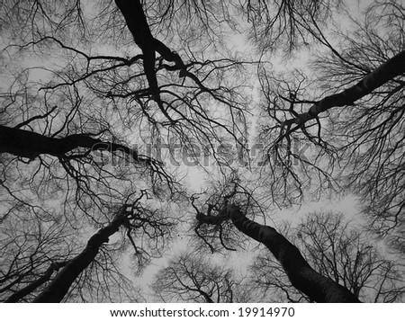 trees - stock photo
