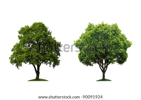 Trees - stock photo