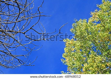 Trees against a sky background in the fall. - stock photo
