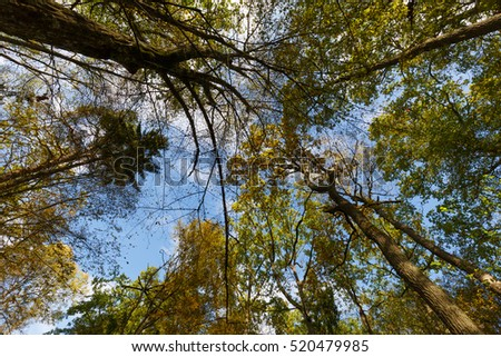 Trees against blue sky in fall, Bialowieza forest, Poland, Europe