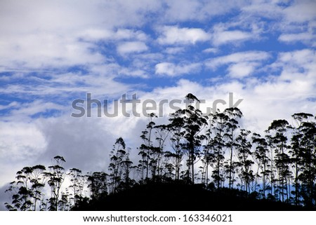 trees against the blue sky with white clouds  - stock photo