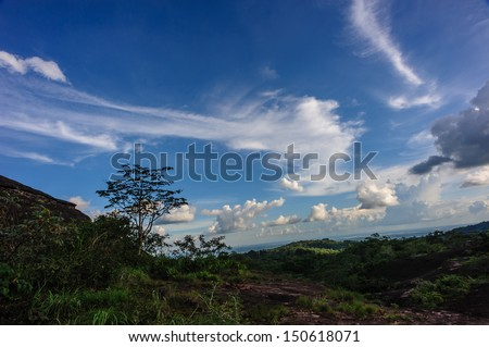 Trees against the sky  - stock photo