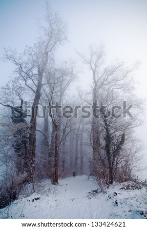 trees along a forest path on a foggy winter day