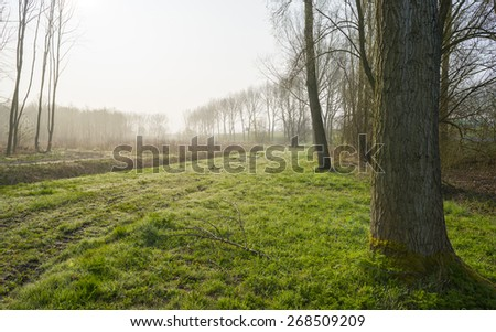 Trees along a sunny foggy field in spring - stock photo