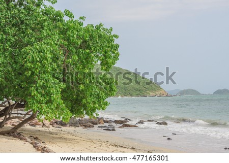 Trees along the beach and the waves.