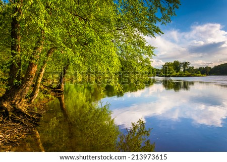 Trees along the Delaware River at Delaware Water Gap National Recreational Area, New Jersey. - stock photo