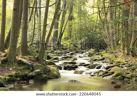 Trees Along the Little River in the Great Smokey Mountains National Park - stock photo