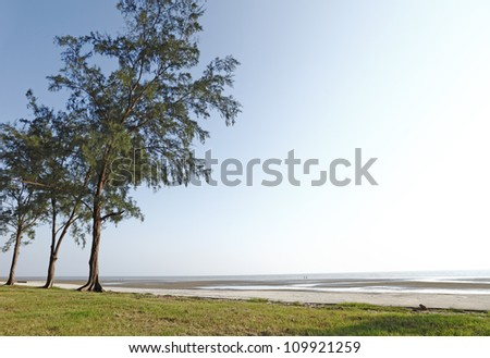 Trees along the shore of tropical beach at low tide. - stock photo