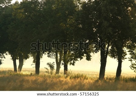 Trees alongside the country road on the edge of a field of grain. - stock photo