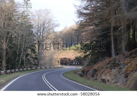 Trees and a bending road in spring