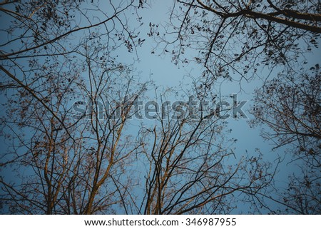 Trees and autumn sky