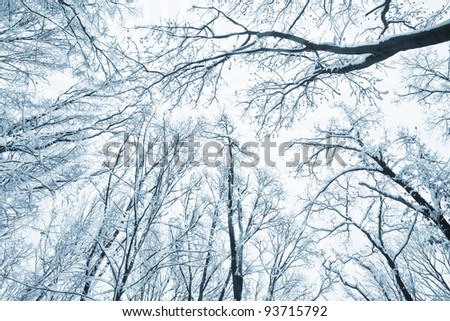 Trees and branches covered with snow over winter sky. - stock photo