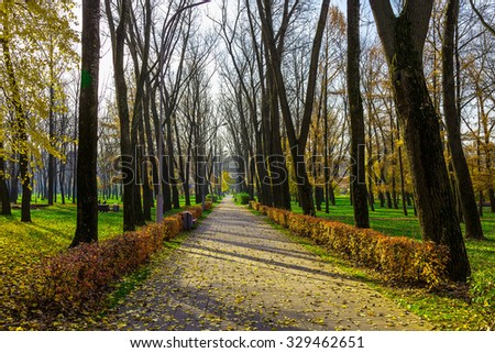 Trees and Bushes Along Alley in Park at Sunny Day in Autumn Season - stock photo