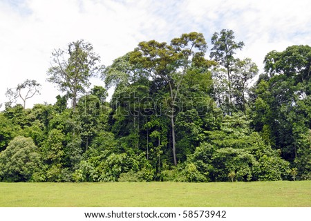Trees and bushes at the fringe of the green wilderness. - stock photo
