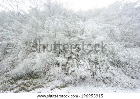 Trees and bushes covered in snow during winter. - stock photo