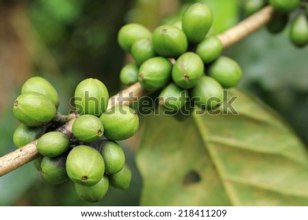 Trees and coffee beans - stock photo