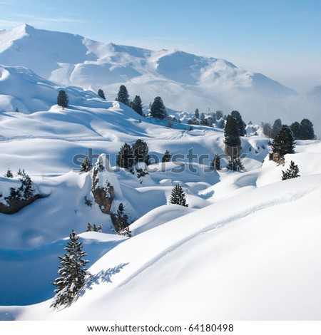 Trees and drifts of snow. High in mountains. The Alps