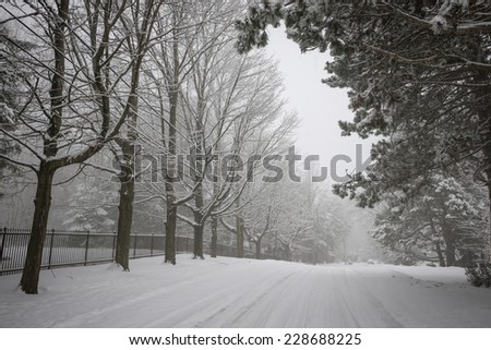 Trees and fence along slippery winter road covered in thick snow. Toronto, Canada. - stock photo