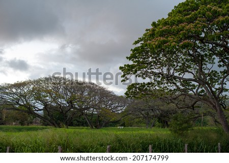 Trees and grass in Kauai - stock photo