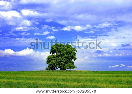 Trees and green grass. Blue sky background - stock photo