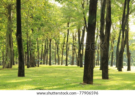 Trees and green grass in the park - stock photo