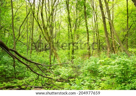 Trees and green vegetation