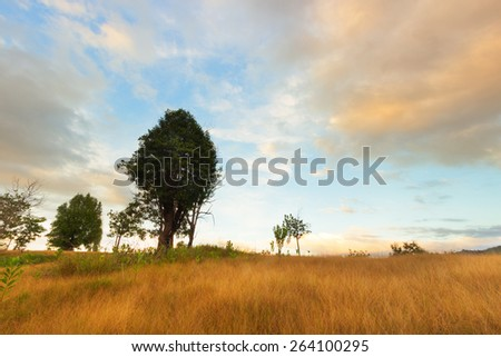Trees and hills in the grassland with soft color effect.