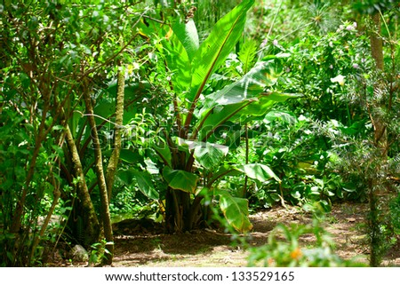 trees and palm in the jungle - stock photo