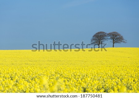 Trees and Rapeseed