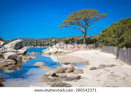 Trees and rocks at the beach of Palombaggia, the most famous beach of Corsica - stock photo
