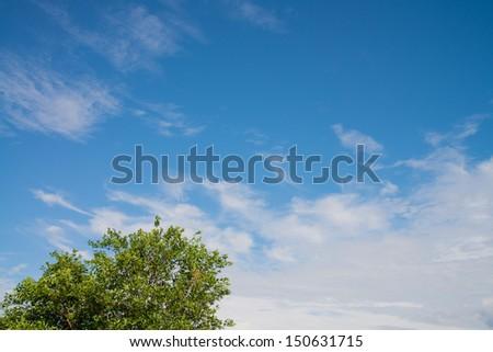 trees and sky - stock photo