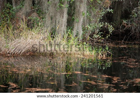 Trees and Spanish Moss, reflected in dark Swamp water - stock photo