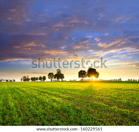 Trees and sunset - stock photo