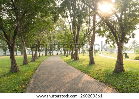 Trees and walkway on green grass field in the park at morning. - stock photo