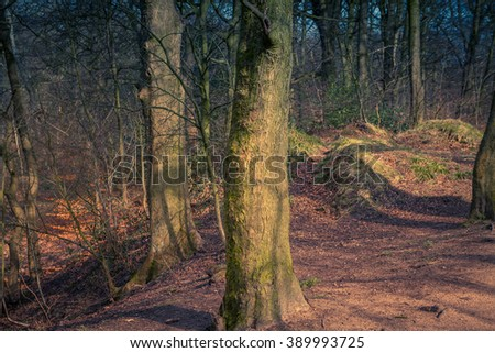Trees and woodland scene in an English forest