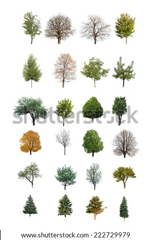 trees are isolated on a white background - stock photo