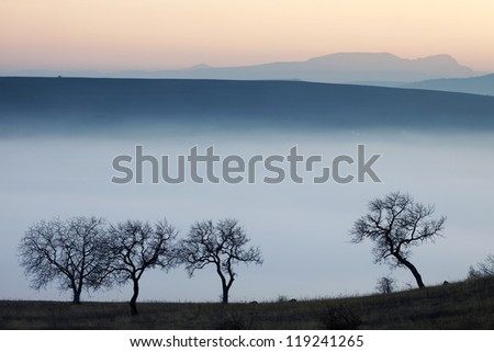 Trees at misty autumn sunset - stock photo