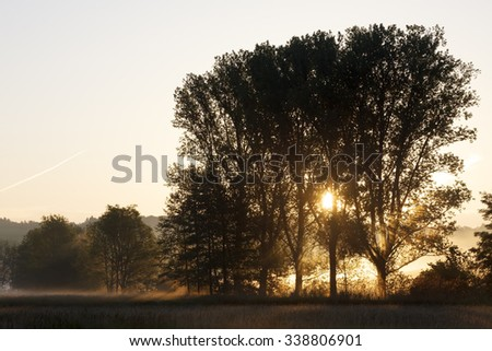Trees at Morning - stock photo