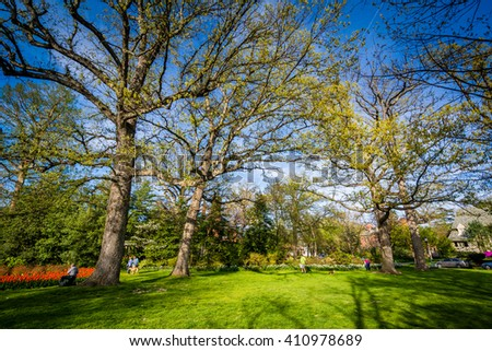 Trees at Sherwood Gardens Park, in Baltimore, Maryland.