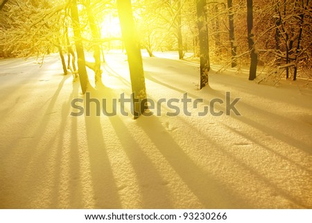 Trees at sunset in winter time. - stock photo