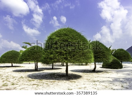 Trees at the beach in a sunny day