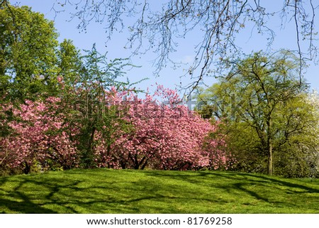 trees at the hyde park in london, uk - stock photo