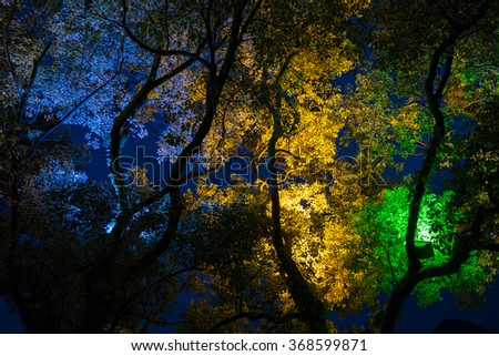 Trees at the park in China by night - stock photo